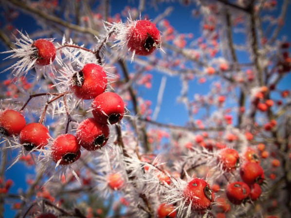 berries by Andy Bonjour